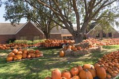 Pumpkin patch church Pearland stock image