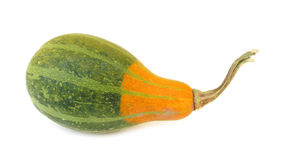 Pumpkin decorative. Squashes generally refer to four species of the genus Cucurbita native to the New World, also called marrows depending on variety or the stock image