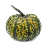 Pumpkin decorative. Squashes generally refer to four species of the genus Cucurbita native to the New World, also called marrows depending on variety or the royalty free stock image