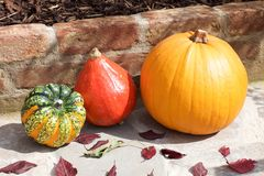 Pumpkin with decorative gourds and autumn leaves Stock Photos