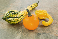Pumpkin with Decorative Squash Stock Photography