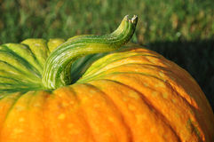 Pumpkin Detail Stock Photography