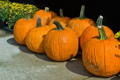 Pumpkin Display. Pumpkin (genus Cucurbita and the family Cucurbitaceae) on display in a shopping center in Prince Frederick, Maryland USA royalty free stock photos