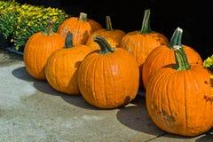 Pumpkin Display Royalty Free Stock Photos