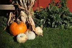Free Pumpkin Display Royalty Free Stock Images - 5752789