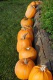 Pumpkin display. Pumpkin array display,  October 2013 Royalty Free Stock Image