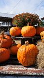 Pumpkin Display Stock Photography