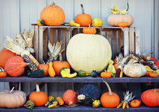 Pumpkin Display Royalty Free Stock Images