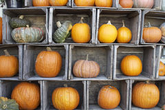 Pumpkin Display. A colorful display of pumpkins and gourds arranged in old farm crates Stock Photo