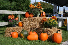 A pumpkin display at a fall festival Stock Photos