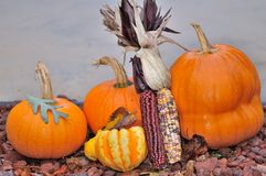 Pumpkin Display. With indian corn and gourds Stock Image