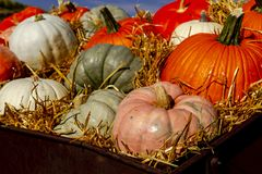 Pumpkin display in old farm equipment on ranch road royalty free stock photo