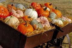 Pumpkin display in old farm equipment on ranch road stock photos