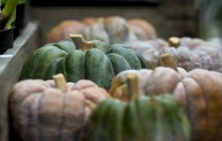 Pumpkin on display 1 Stock Image