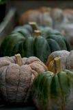 Pumpkin on display 4 Stock Photos