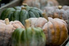 Pumpkin on display 2 Stock Image