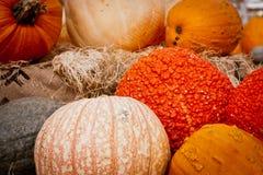 Pumpkin Display Royalty Free Stock Photography