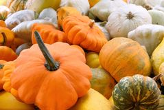 Pumpkin diversity. Plenty of different pumpkins, shot at daylight royalty free stock photo