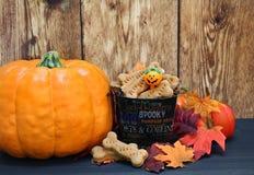 Pumpkin dog bones in a fall setting. stock photo