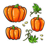 Pumpkin Drawing Set. Isolated Hand Drawn Vegetable, Plant Royalty Free Stock Photos