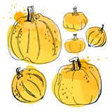 Pumpkin, drawing by watercolor and ink with paint splashes on wh. Ite background royalty free illustration