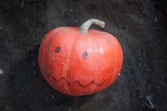 Pumpkin with drawn mouth and eyes in dark soil Royalty Free Stock Photos
