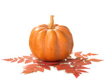 Pumpkin with dry autumn leaves Royalty Free Stock Image