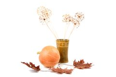 Pumpkin dry flowers and leaves isolated Royalty Free Stock Photography