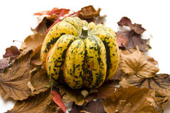 Pumpkin on dry leaves Royalty Free Stock Photos
