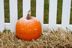 Pumpkin with dusting of snow Stock Images