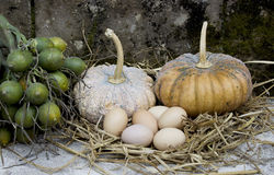 Pumpkin and eggs Stock Image