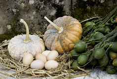 Pumpkin and eggs Stock Photography