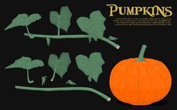 Pumpkin element Royalty Free Stock Photos