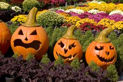 Pumpkin faces in a bed of fall flowers Stock Images