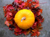 Pumpkin at Fall Royalty Free Stock Photo