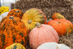 Pumpkin or Fall Background Royalty Free Stock Photography