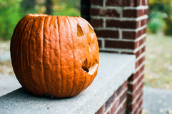 Pumpkin in the Fall - Film Grain Stock Photo
