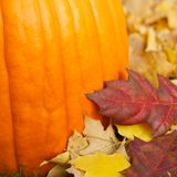 Pumpkin with fall leaf colors Royalty Free Stock Photography
