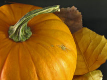 Pumpkin With Fall Leaves Royalty Free Stock Photos