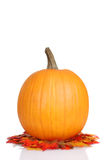 Pumpkin on fall leaves Royalty Free Stock Images