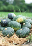 Pumpkin and Fall Leaves Royalty Free Stock Photo