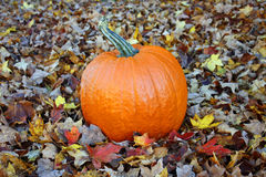 Pumpkin in fall Leaves Stock Photo