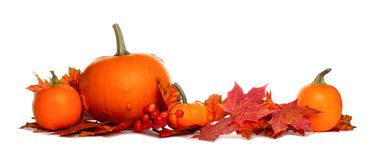 Pumpkin and fall leaves border isolated on white. Autumn border of pumpkins and red fall leaves isolated on a white background Stock Photo