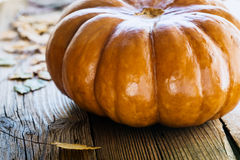 Pumpkin with fall leaves Stock Image