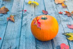 Pumpkin with fall maple leaves on old rustic wooden background. Autumn harvest, thanksgiving, halloween concept. healthy diet food. Selective focus. Copy space stock photo