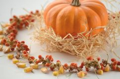 Pumpkin in a fall nest of corn and red berries. Happy Thanksgiving orange pumpkins background royalty free stock image