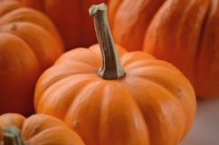 Pumpkin in a fall nest of corn and red berries. Happy Thanksgiving orange pumpkins background stock image