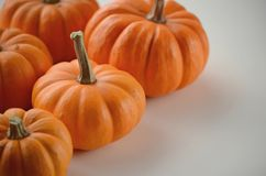 Pumpkin in a fall nest of corn and red berries. Happy Thanksgiving orange pumpkins background stock photography