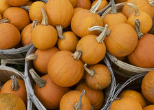Pumpkin, Fall Stock Image