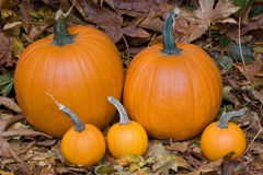 Pumpkin family Royalty Free Stock Photography